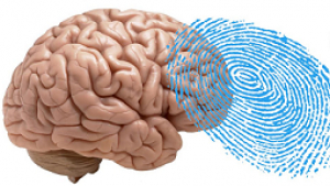 Fingerprints in the brain